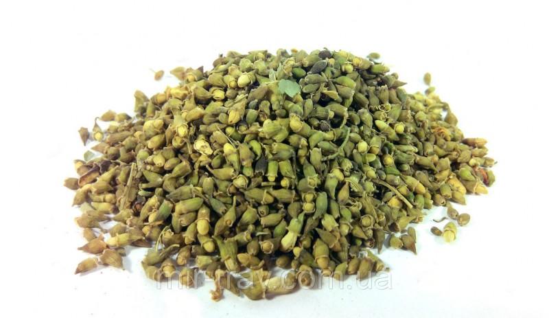 Лечебные свойства и применение настойки из японской софоры