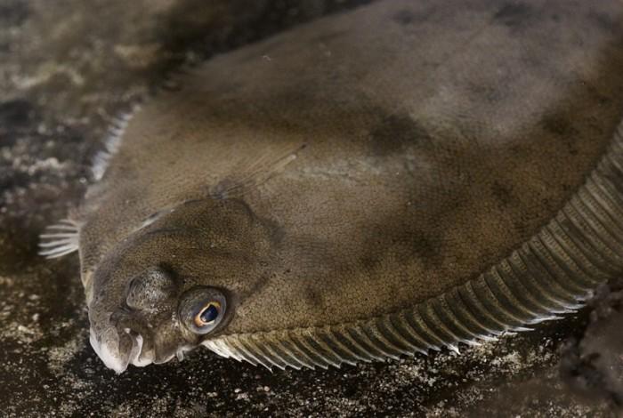 Глубинная рыба