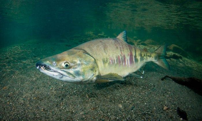 Серьезная рыбка