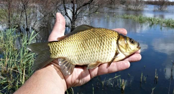 Только что пойманная рыбка