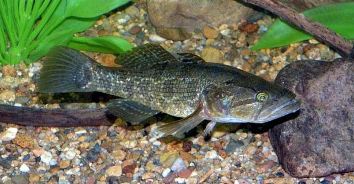 Небольшая рыбка