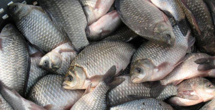 Выбирайте для копчения свежую рыбу