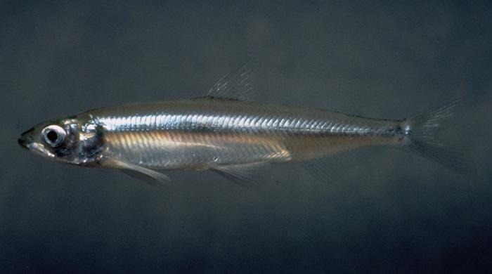 Рыбка в водоеме