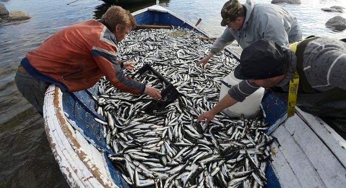 Ловля стайной рыбы