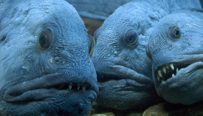 Красавцами таких рыбешек сложно назвать