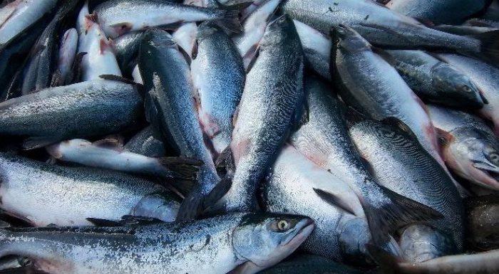 Рыба отправляется в магазин