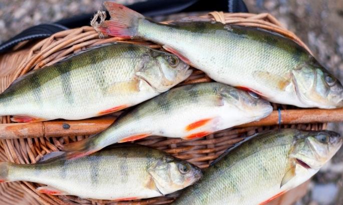Рыба из свежего улова