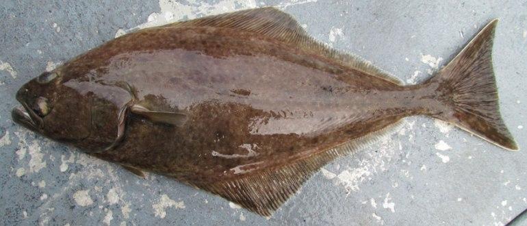 Странноватого вида рыба