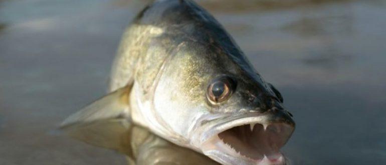 Опасная рыба