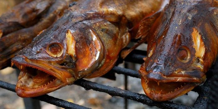 Злые рыбки