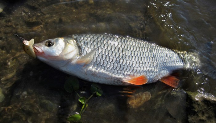 Удача рыбака