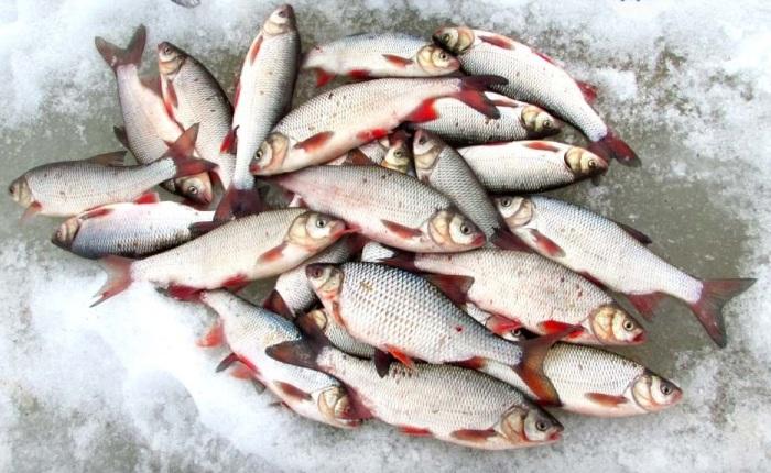 Рыба ловится круглый год
