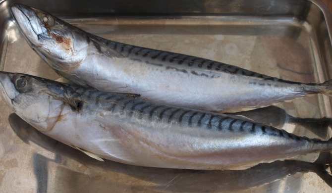 Две увесистые тушки рыбы