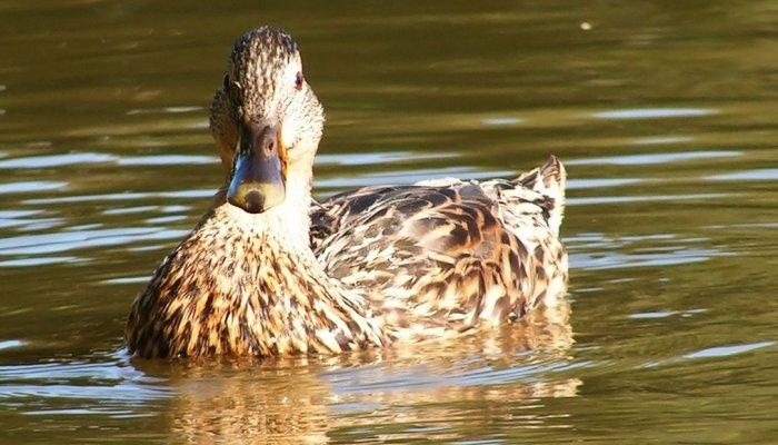 Птица в пруду