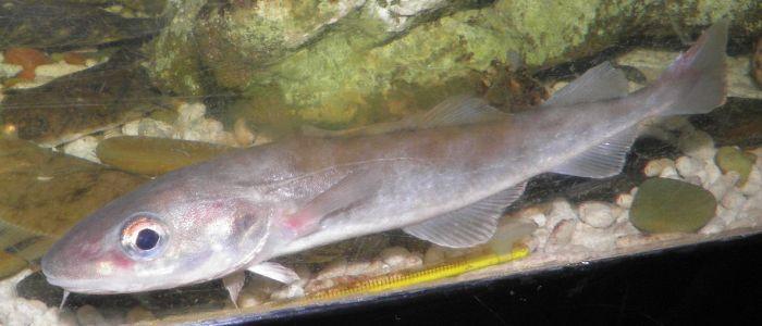 Рыба в своей среде
