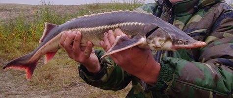 Отличный улов рыбака