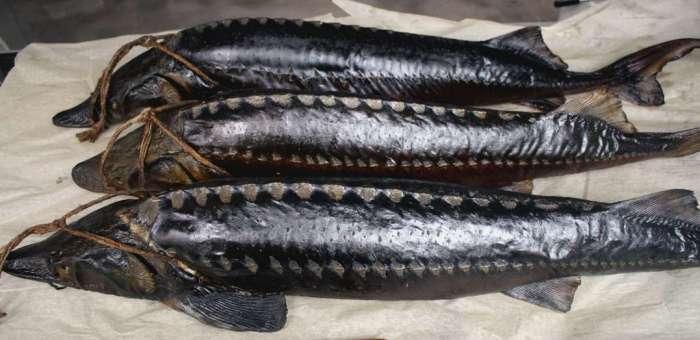 Рыба готова к хранению