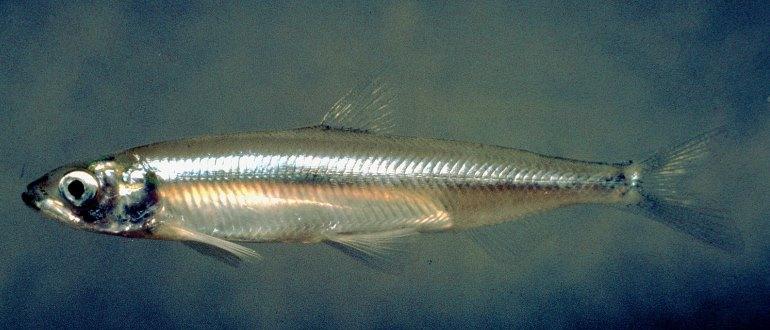 Рыбка плавает в воде