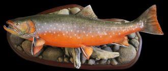 Копчение рыбы голец