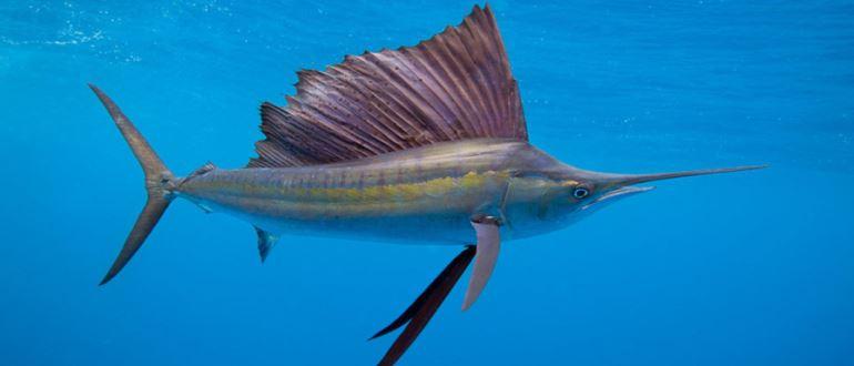 Рыба плывет в океане
