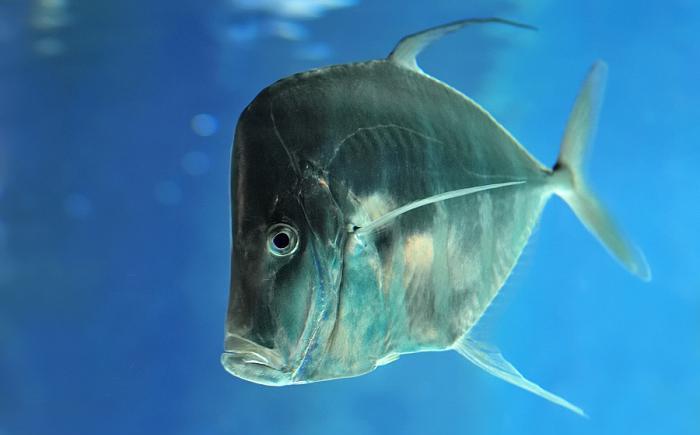 Рыба странной формы