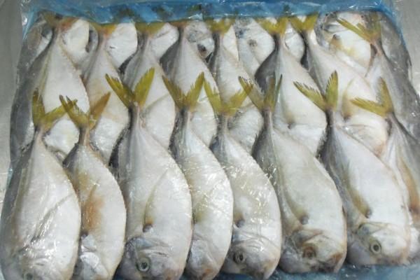 Подходящая рыба