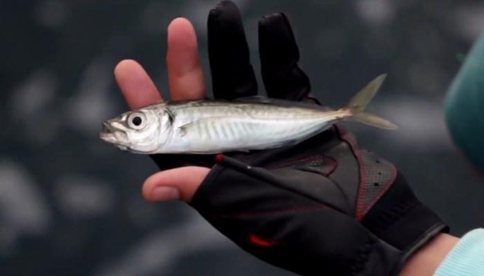 Рыбка в руке