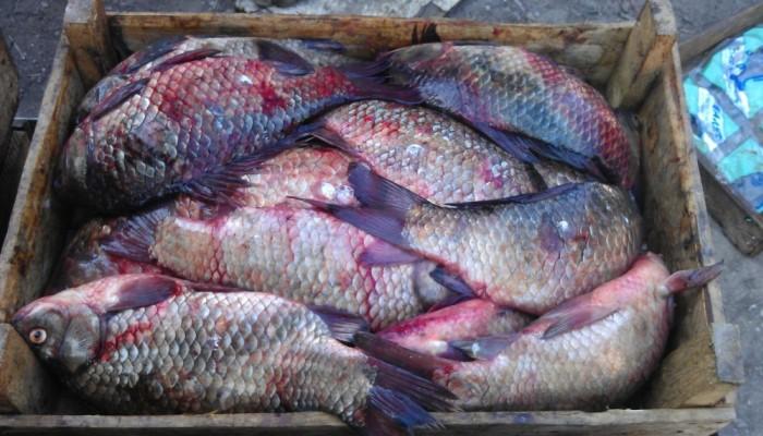 Ящик рыбы