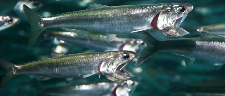Рыбки в водоеме