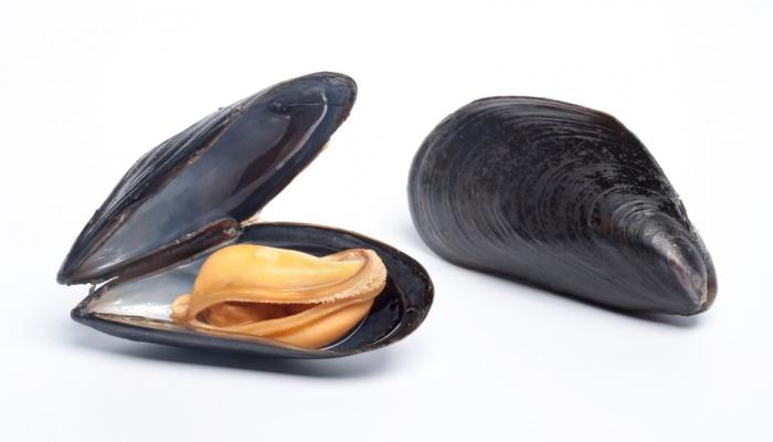 Морской продукт