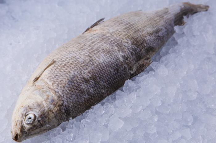 Рыбка во льду