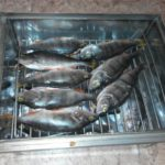 Размещение рыбы
