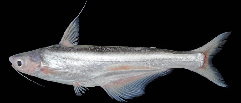 Интересная рыба