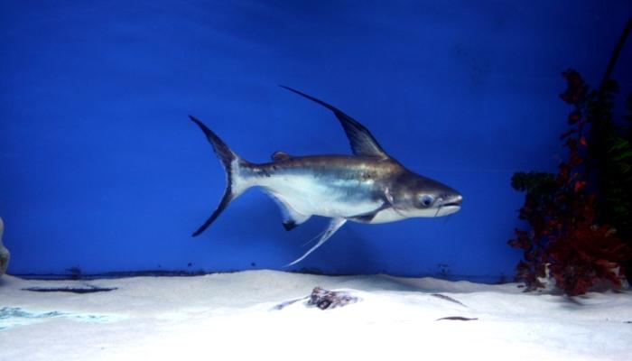 Рыба в водоеме