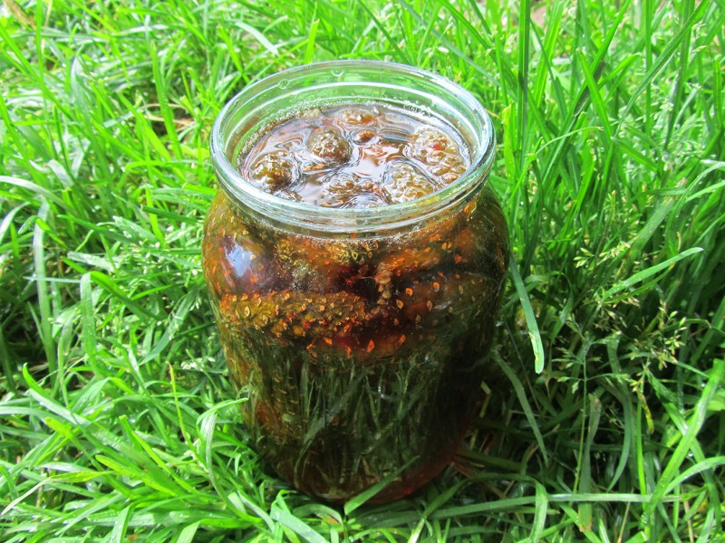 Изготовление и применение настоек из еловых шишек и хвои